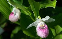 Lady Slipper Scenic Byway